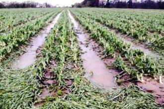 """""""Fue viento, piedra y lluvia, todo junto"""", describió un asesor rural y habló de las consecuencias"""