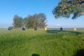 Buscan con perros y una avioneta a la anciana que desapareció hace cinco días