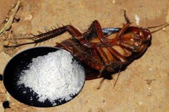 Muerte de mellizos: determinan intoxicación con veneno para cucarachas