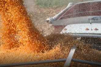 Transportistas entrerrianos de cereales paran por tiempo indeterminado