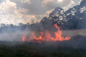 Voraz incendio en la banquina afectó una plantación de pinos