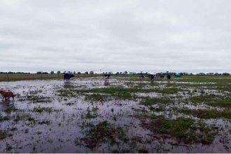 Lluvias de más de 200 milímetros anegaron campos productivos del NEA