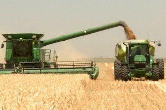 El trigo hace punta en la provincia con mayor área y mejores rindes