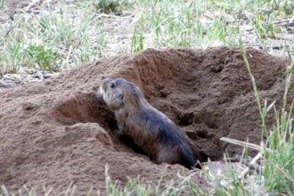 Encontraron especie en peligro de extinción en parque nacional entrerriano