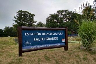 A cinco meses de su inauguración, tuvo lugar la primera cosecha de pacú y sábalo