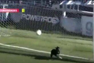 En la cancha de club entrerriano, un perro se convirtió en defensor y evitó un gol