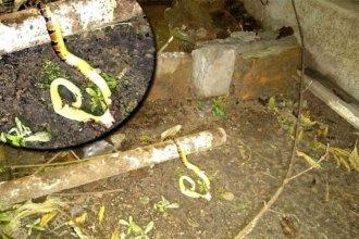 El hallazgo de víbora causó temor y preocupación en barrio uruguayense