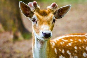 En Paso Hervidero, los descubrieron con 5 ciervos faenados y fueron detenidos