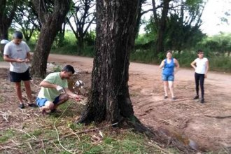 Nuevo caso de árboles envenenados en Colón