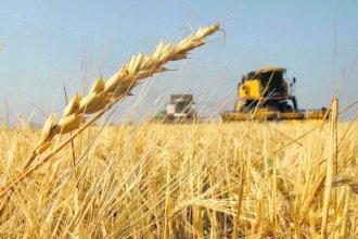 Entre Ríos tendrá récord en la producción de trigo durante el ciclo 2018/19