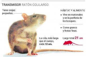 Un brote de hantavirus en Chubut refuerza las medidas de prevención en todo el país