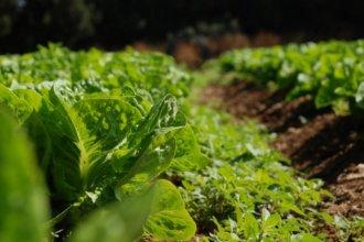 Transición hacia la agroecología: productores, ambientalistas y Gobierno crearon un foro de trabajo