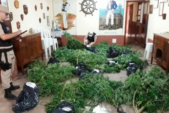 Colón: Prefectura allanó una vivienda e incautó varias plantas de marihuana