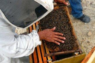 """Reportan apiarios afectados por el """"mal del río"""" en el litoral entrerriano"""