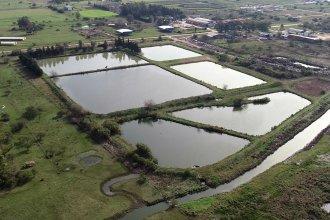 Recorrido por las lagunas de tratamiento de Villa Elisa: un predio casi sin olor, vegetación y fauna silvestre