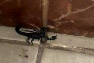 Un escorpión negro y una serpiente visitaron su casa