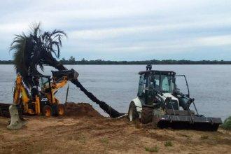 Operativo en la playa para salvar dos palmeras