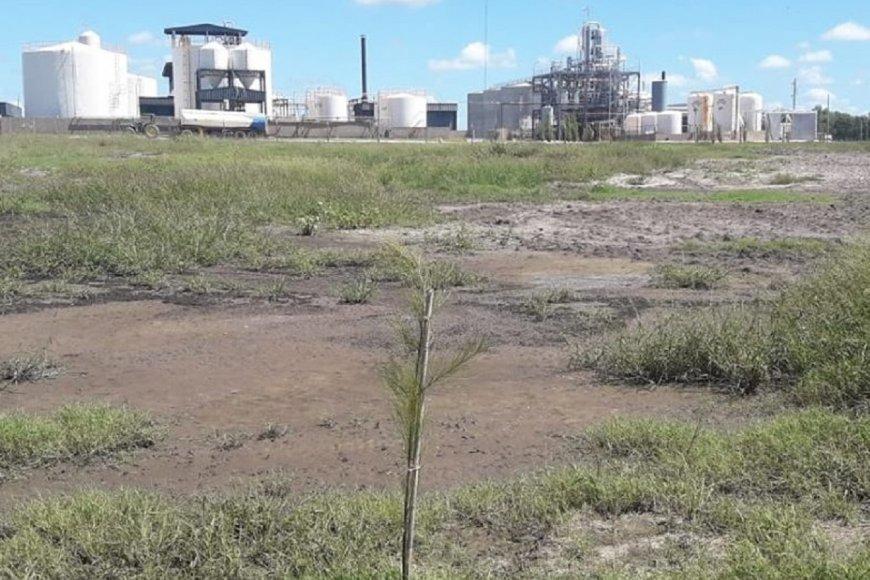 Imágenes tomadas por el grupo ambiental de Nogoyá