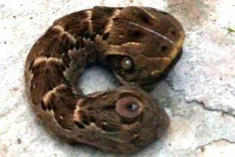 Un extraño espécimen sorprendió a vecinos de una localidad entrerriana