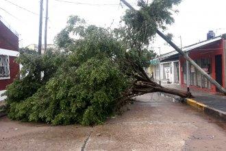 Cortes de luz, árboles caídos y tránsito restringido en la Autovía: lo que dejó el temporal en Concordia