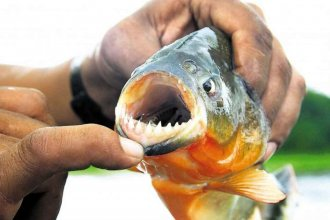 Pirañas atacaron en el Lago de Salto Grande