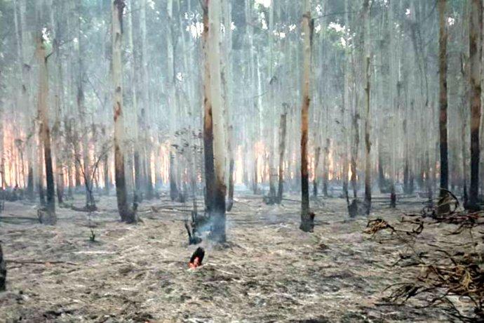 Un incendio forestal a metros de la autovía motivó la intervención de los bomberos de tres ciudades