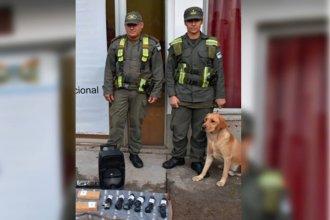 """El olfato de """"Guli"""" permitió encontrar más de dos kilos de droga ocultos en un auto"""