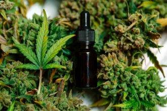 Marihuana: consumo recreativo y usos medicinales