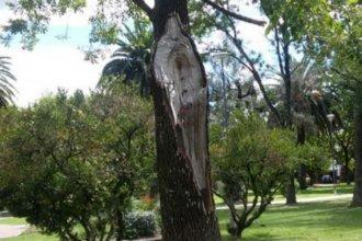 Tras una tormenta, vecinos afirman que la imagen de la Virgen María apareció en un árbol