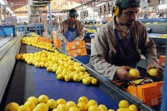 Exportadora de citrus en concurso de acreedores recibirá apoyo estatal por 3,5 millones de dólares