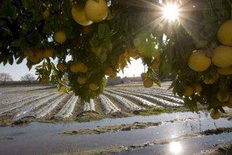 Mientras en Argentina los hijos de los citricultores dejan el campo, en España apoyan a jóvenes para que empiecen a producir