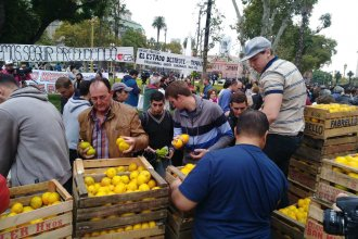 Tras el frutazo en Plaza de Mayo, la Emergencia Citrícola tiene media sanción: ¿Qué dicen los citricultores?
