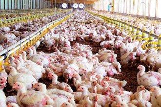 Productores entrerrianos disminuyeron un 7% el precio de los pollos: Esperan que la baja se traslade a las góndolas