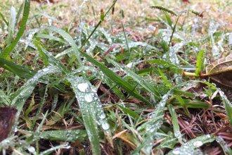 Detectan presencia de pesticidas en agua de lluvia en la costa del Río Uruguay