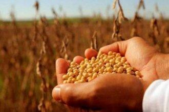 Monsanto intimó a productor entrerriano a pagar más de 50 mil dólares en regalías por el uso de semillas