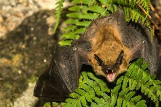 ¡Alerta rabia! Sorprendente hallazgo de un murciélago rabioso, en el sur provincial