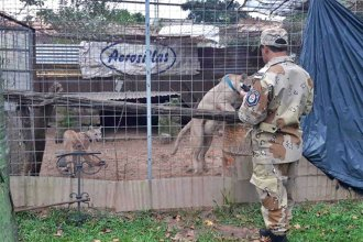 ¿Cuál es el destino de los pumas hallados en una vivienda de Concordia?