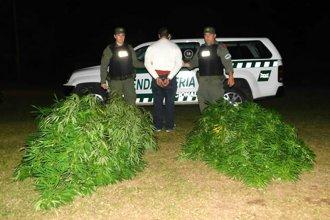 Los detuvieron al descubrirles plantas de marihuana de más de 2 metros y droga fraccionada