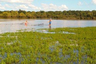 Dorados, sábalos y bogas del río Uruguay tenían restos de medicamentos, según un estudio