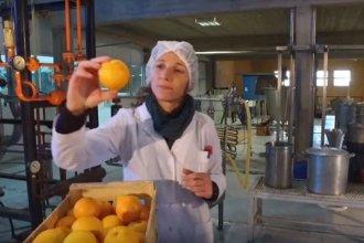 """Laboratorio de la UNER elabora un recubrimiento """"comestible"""" para los citrus, con propiedades antimicrobianas"""