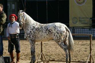 Los caballos pecosos, el atractivo que se suma a la Expo Rural del sur entrerriano