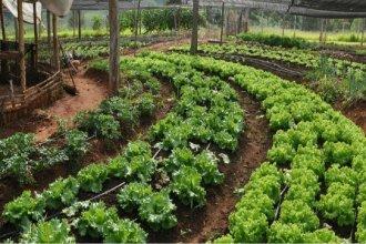 Desde Gualeguaychú, proponen implementar la producción agroecológica cerca de escuelas rurales