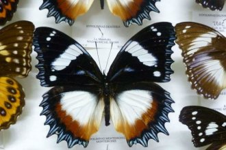 El hobbie de un médico que se convirtió en una de las colecciones más importantes de mariposas e insectos