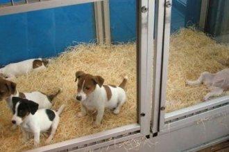 Mediante una ordenanza, ciudad entrerriana prohibió la exhibición de animales en vidrieras