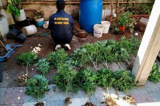 Fueron tras las pistas de un robo y se encontraron con un invernadero de marihuana