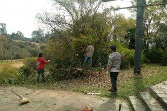 Cortaban árboles autóctonos en la reserva del Parque San Carlos