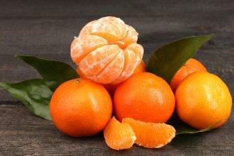 Inta Concordia presentó dos nuevas variedades de mandarinas saneadas