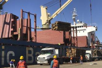 La primera exportación argentina de eucalipto a China saldrá desde dos puertos entrerrianos