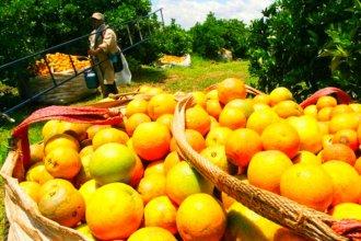 ¿Qué dicen las leyes vigentes sobre el trabajo en quintas citrícolas y arandaneras?