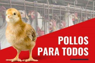 Los pollos más caros del mundo: el negocio de Argentina con Venezuela